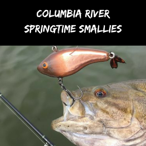 Columbia River Springtime Smallmouth Tactics